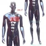 манекен    Мужской  Фотосессия AB-57 ,черный глянец